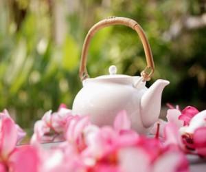 武夷禅语:生活乐土的一盏茶