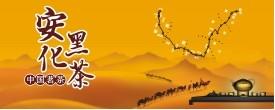 中国安化黑茶网