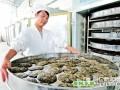 贵州印江茶叶下树率提高40%