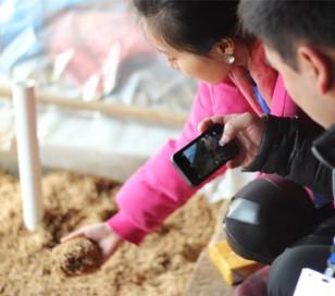 浙江安吉:一茶农以茶制酒 年产达400吨