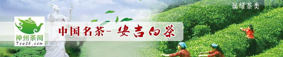 中国安吉白茶网