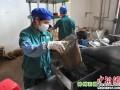 广西六堡茶畅销东南亚及欧美国家