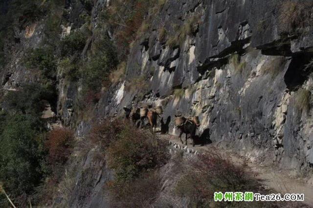 那些早已消失在茶马古道上的马帮们