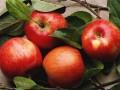 苹果虽好但这么吃很伤身