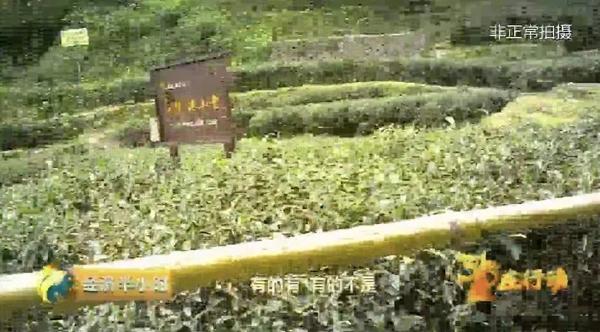 南平回应武夷岩茶520万1斤:严格制茶大师评定