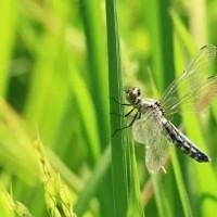 稻米解香、2018上海优质大米博览会