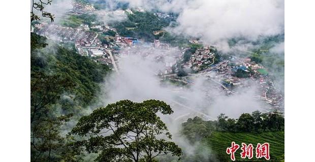 """西藏""""莲花秘境""""茶香飘"""