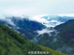 振兴中国好茶公益助农行动宣传片